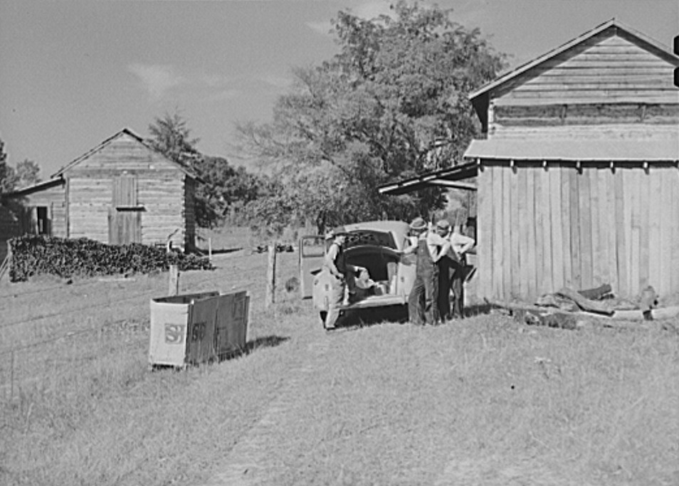 During the tobacco marketing season peddlers drive around to the tobacco barns and strip houses through the county to sell their wares to the farmers and tenants. Caswell County, NC