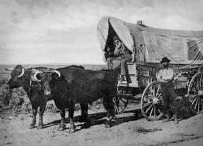 ox pulling wagon