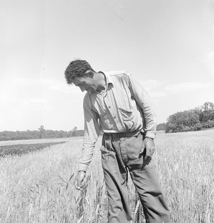 Hightstown, New Jersey. Member of the farming group on the project. Polish-Jewish born, served in the American Army, World War june 1936 lange