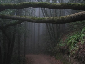 The-misty-forest-Sequoia-Bayview-Trail-Joaquin-Miller-Park-Oakland-CA