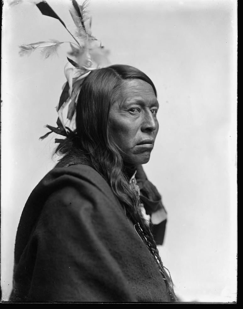 flying hawk american indian