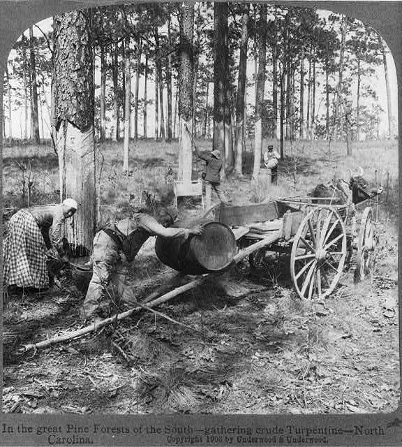 1903 In the great pine forests of the South - gathering crude turpentine - North Carolina