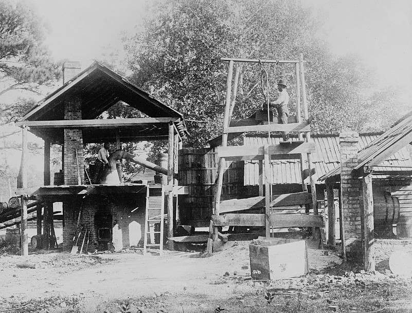 1909, Turpentine farm, Clinton, N.C.
