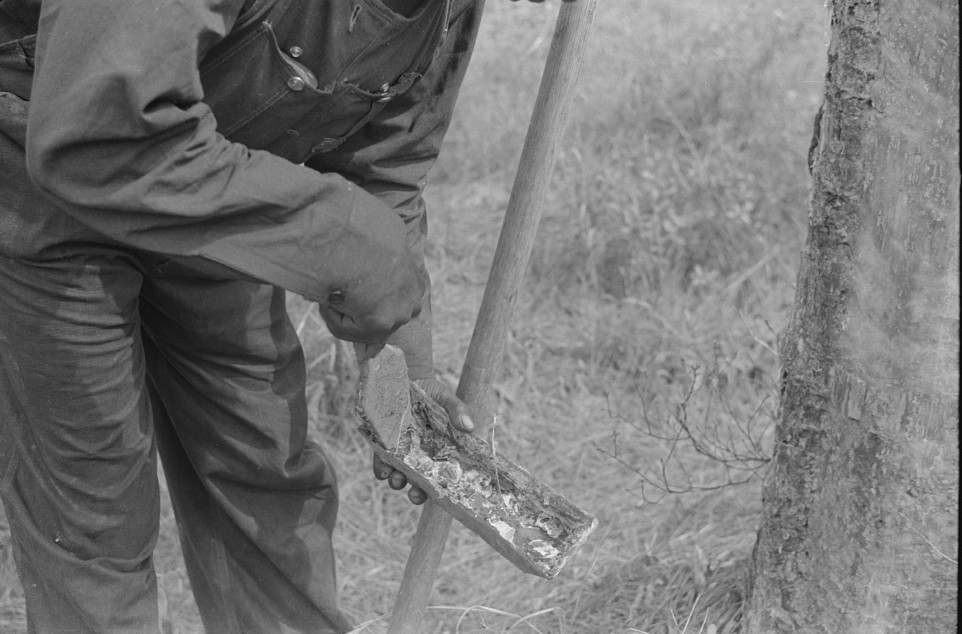 3A hack used in chipping turpentine in a turpentine grove near Pembroke, Georgia Apr 1941 by Jack DeLano