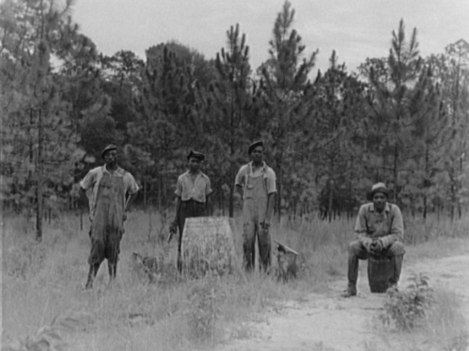 3Georgia Turpentine still July 1937 by Dorothea Lange