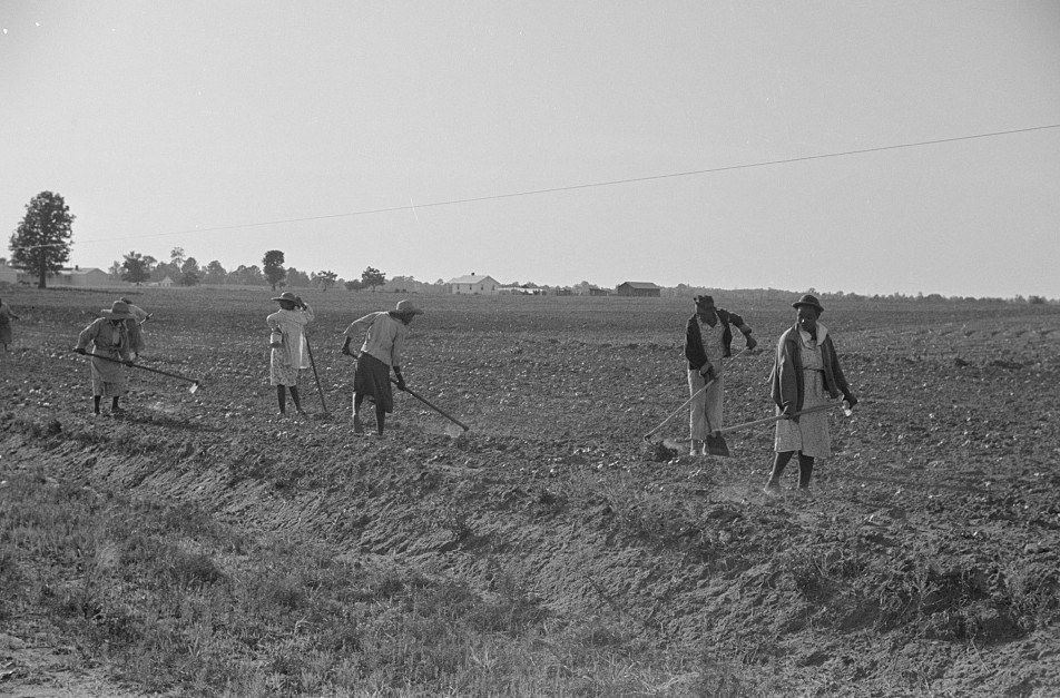 Chopping cotton, near Montezuma, Georgia 1939