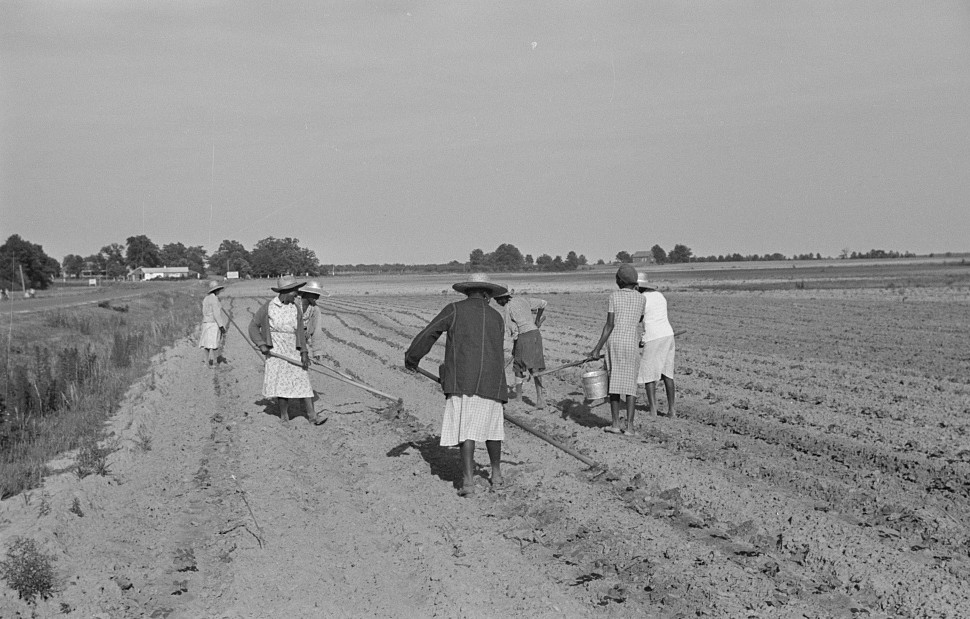 Chopping cotton near Montezuma, Georgia may 1939