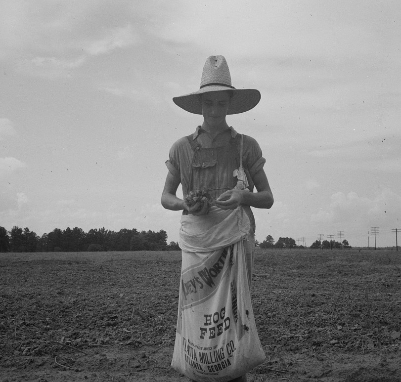 Farm boy with sack full of boll weevils which he has picked off of cotton plants. Macon County, Georgia2 1937 lange