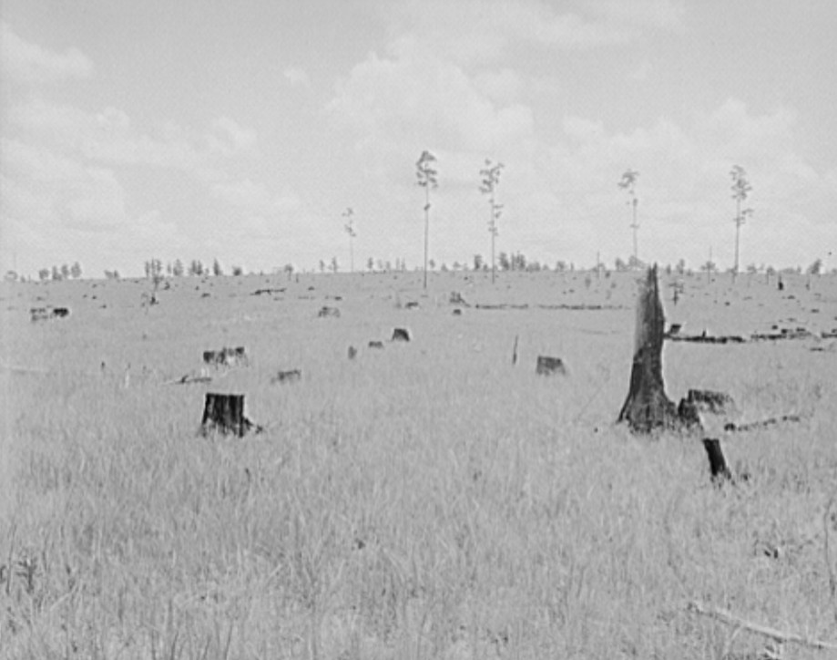 Land cut over by lumber company and not replanted. Greene County, Georgia. 1937 dorothea lange
