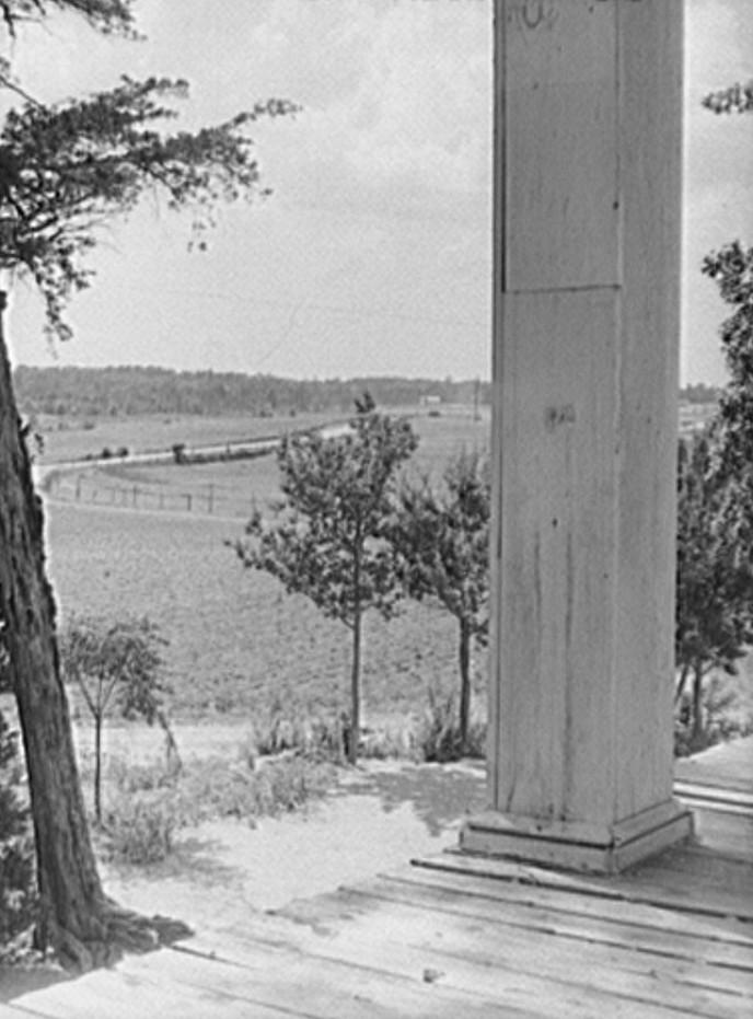 Landscape from the plantation house on the Jackson farm, near White Plains, Greene County, Georgia