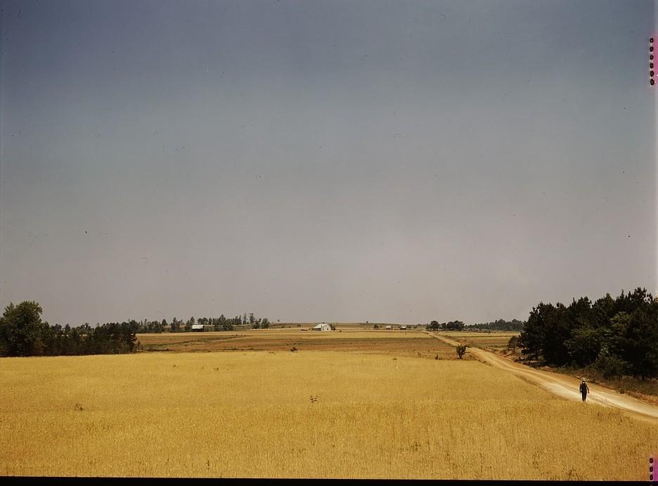 Landscape on the Jackson farm, vicinity of White Plains, Ga. color