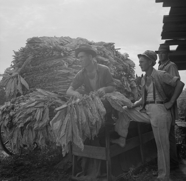 Loading cured tobacco for market. Georgia 1937 Lange