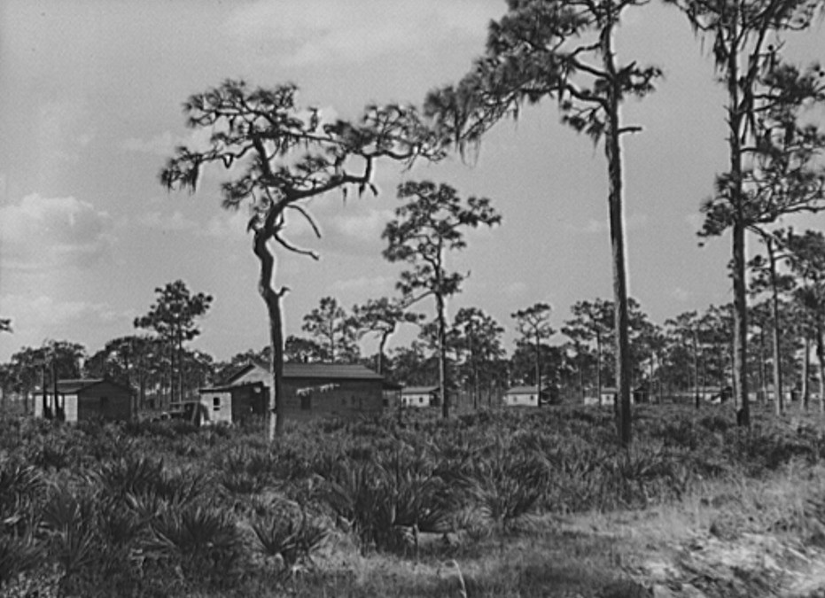 North Florida Turpentine Camp Jan 1939 by Marion Post Walcott