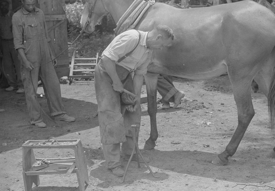 Shoeing a mule in 1939 Greene county