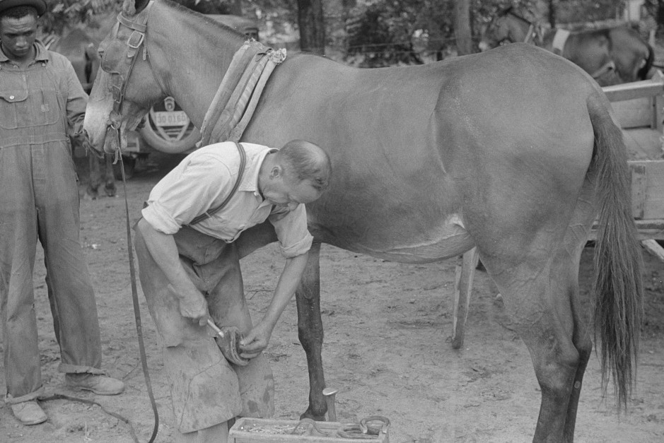 Shoeing a mule in 1939 Greene county3