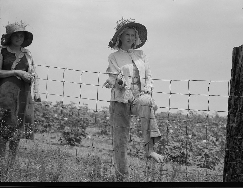 The landowner's daughter hoes cotton on a south Georgia farm