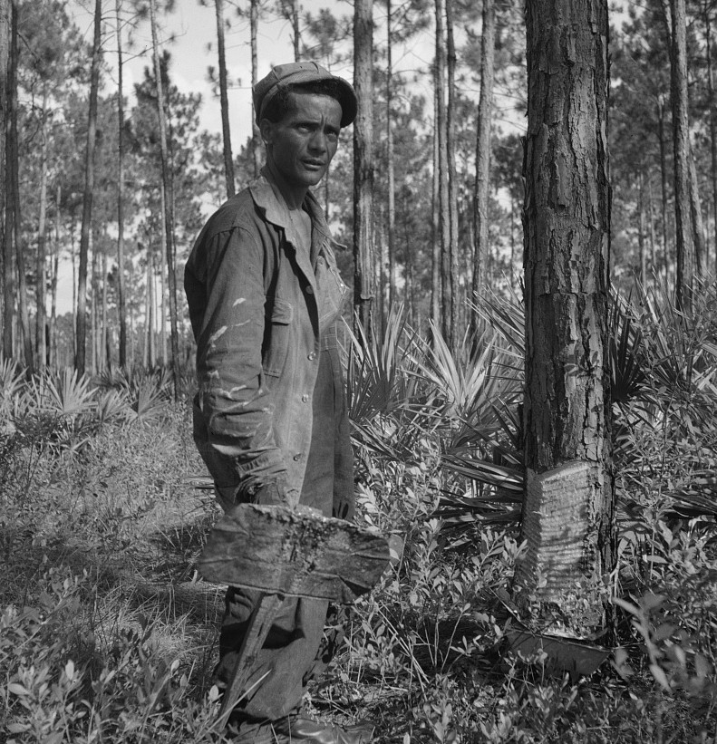 Turpentine chipper and slashed tree near Homerville, Georgia July 1937 by Dorothea Lange