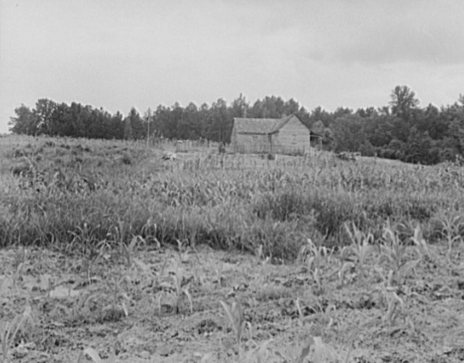 Typical owner-operated small farm of Greene County, Georgia 1937 dorothea lange