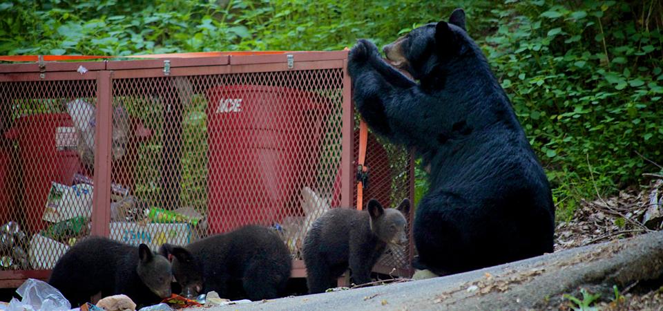 bears trash can