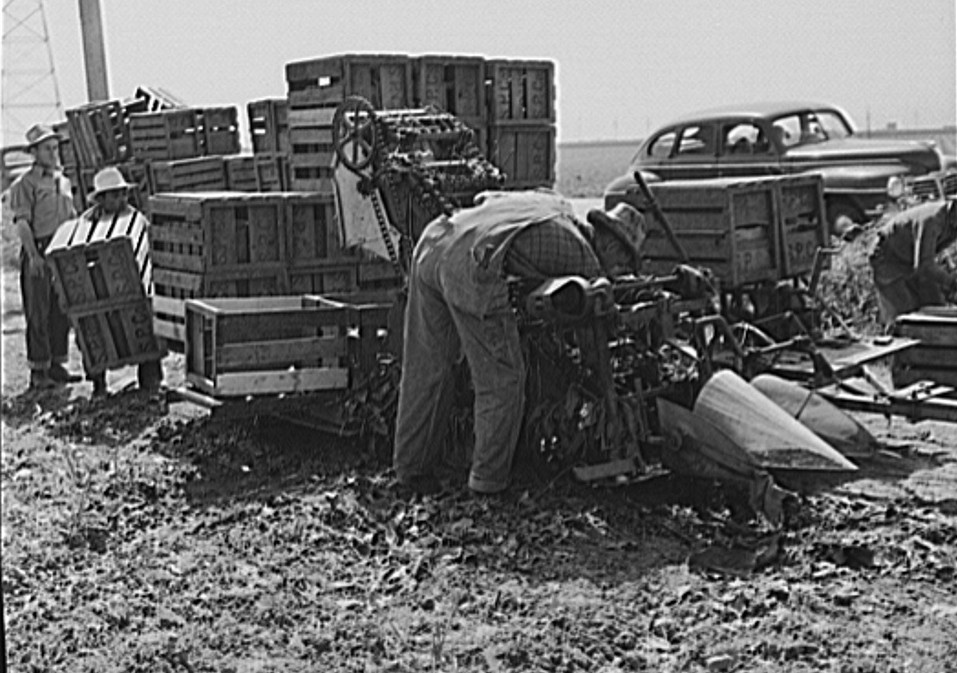 spinach harvester may 1942 russell lee