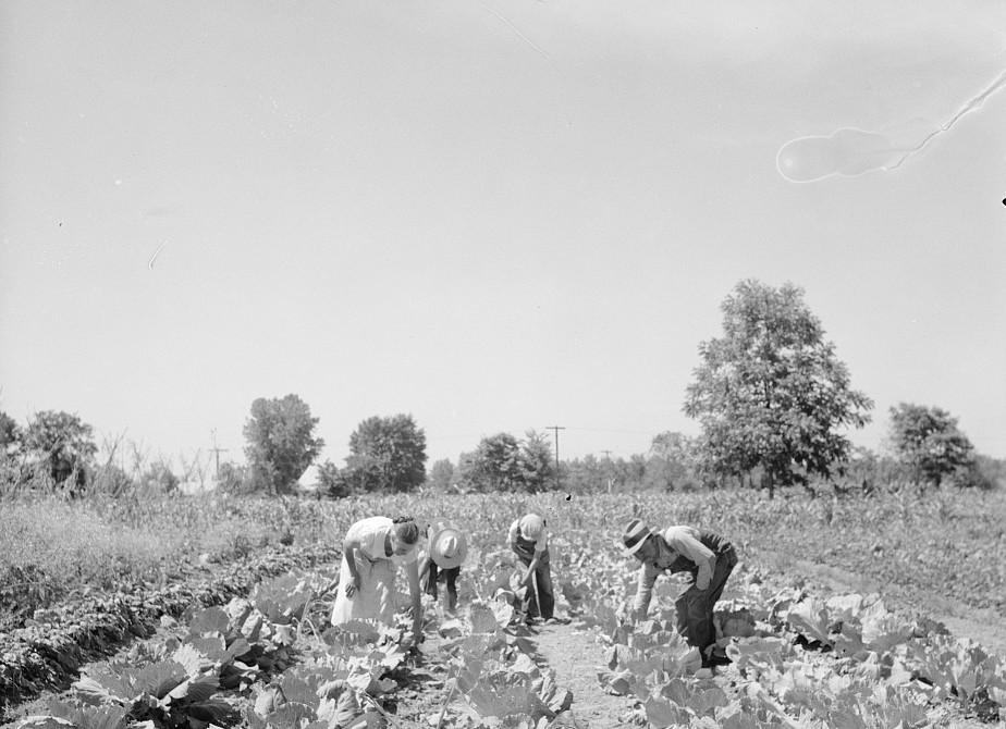 Rehabilitation clients in garden showing cabbages grown this season. Near Batesville, Arkansas