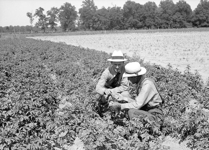 Resettlement Administration rehabilitation loan supervisor talking with client on potato raising problems. Near Batesville, Arkansas June 1936