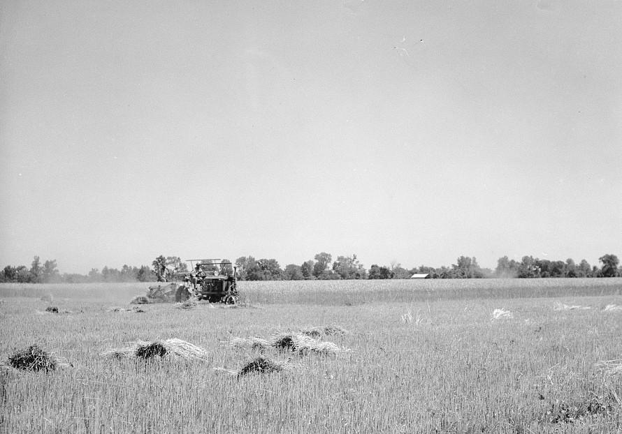 binding of wheat near Batesville, Arkansas June 1936 by Carl Mydans