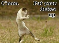 DYK: Put up your dukes and fight like a man!