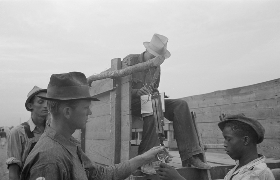 Cotton picker with recorder2, Lake Dick Project, Arkansas