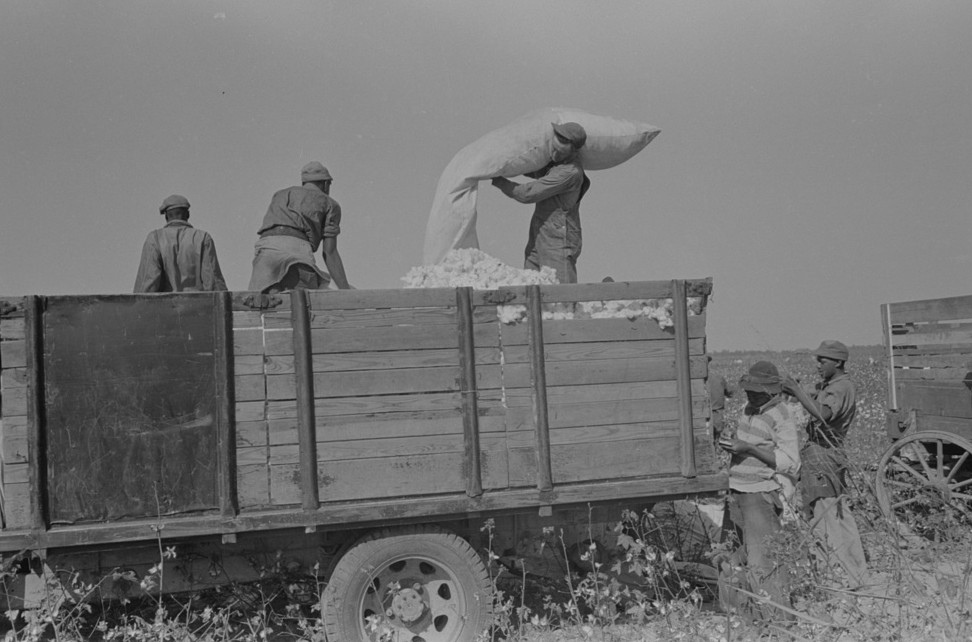 Emptying sacks of cotton onto truck, Lake Dick Project, Arkansas