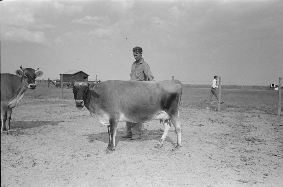 Farmer Lake Dick Project, Arkansas by Russell Lee Oct 19388