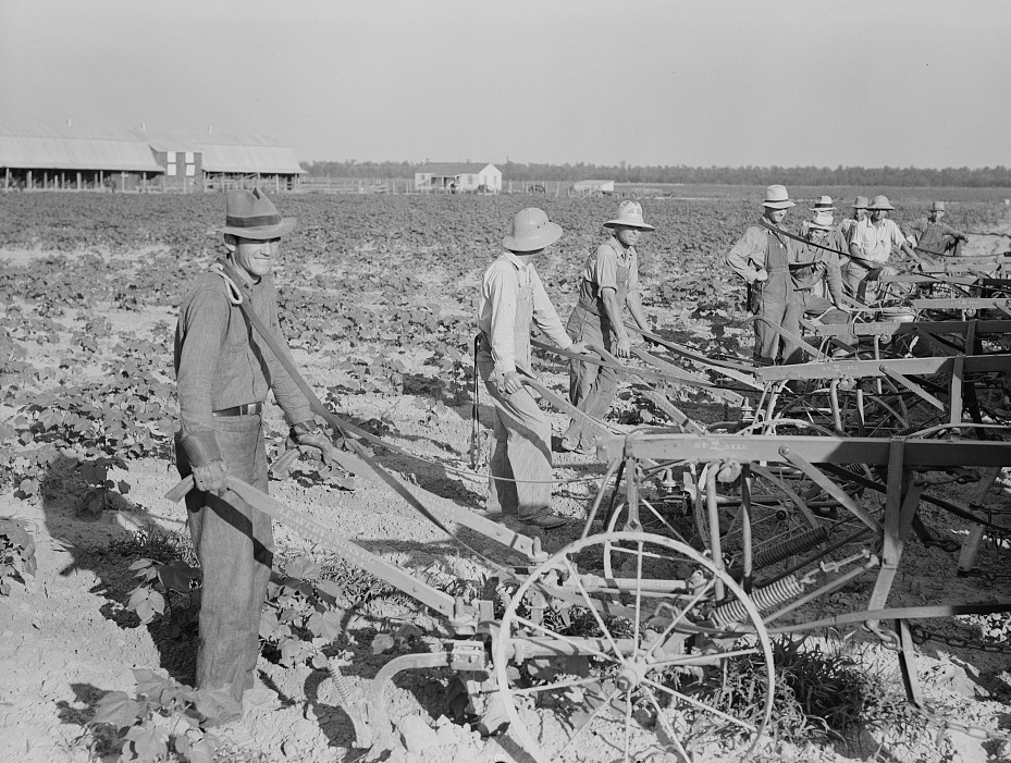 Farmers about to begin cooperative cultivation of cotton at Lake Dick project, Arkansas3