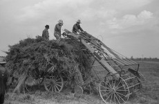 Fantastic photographs of making sorghum and haying at Lake Dick, Arkansas in 1938