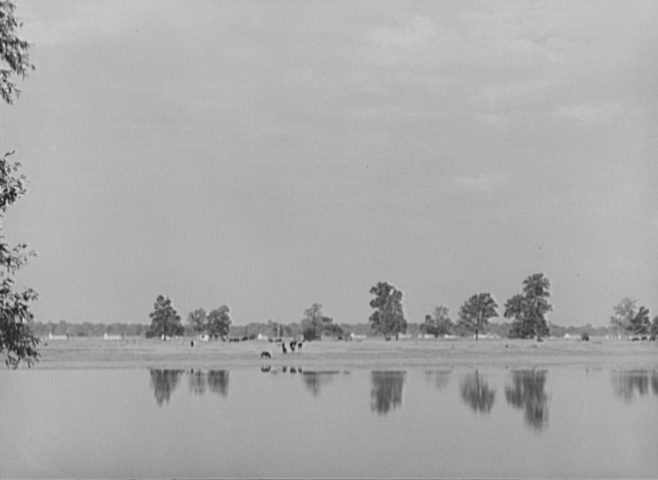 Looking across the lake, Lake Dick Project, Arkansas Oct. 1938 by Russell Lee