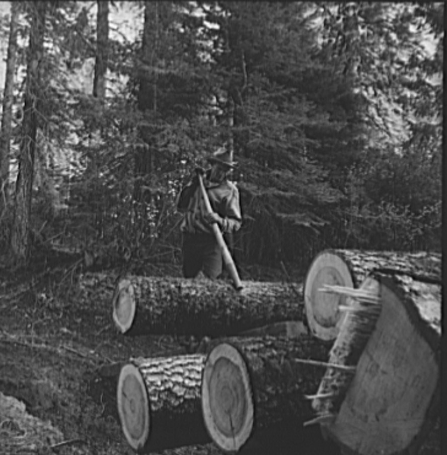 Member of the Ola self-help sawmill co-op working in the woods, rolling log to truck with peavey, a hooked and spiked stick used as a lever