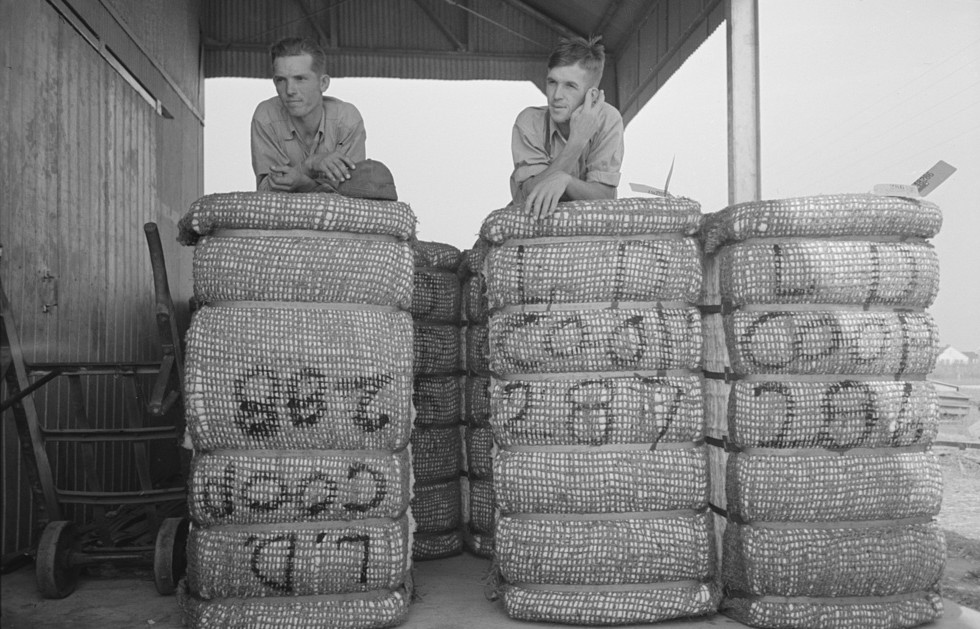 Members of Lake Dick cooperative resting on bales of cotton, Lake Dick Project, Arkansas Oct. 1938 by Russell Lee