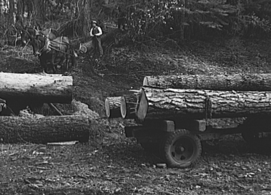 Members of Ola self-help sawmill co-op snaking a fir log down to the truck