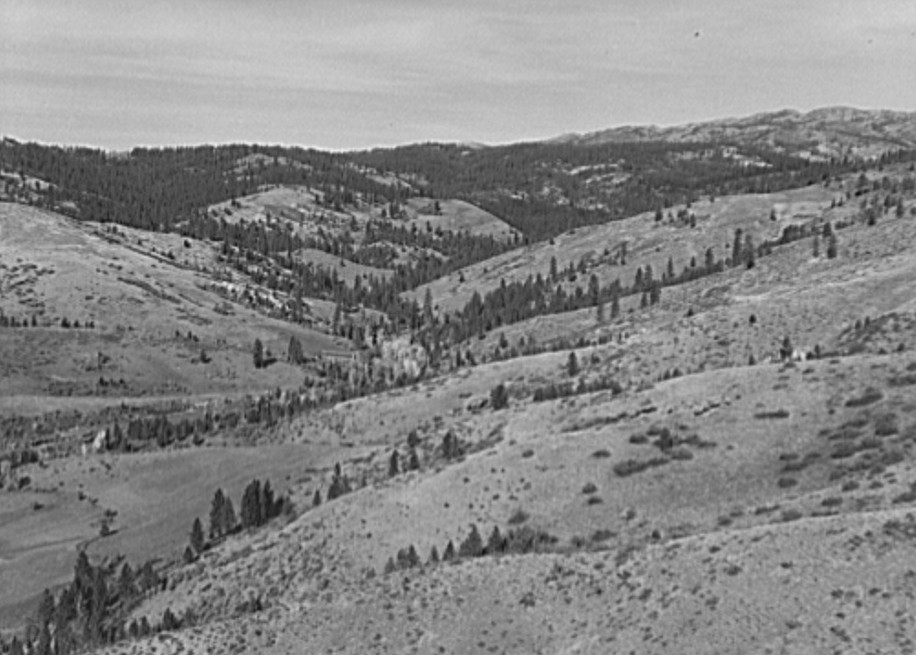 Upper end of Squaw Creek Valley near the mill, showing part of the timber resources. Ola self-help sawmill co-op.