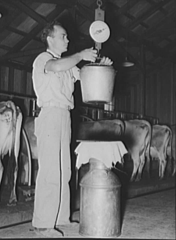 Weighing the milk. Dairy farm, Lake Dick Project, Arkansas. Daily production record of each cow is kept