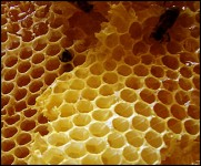 DYK: Has anyone ever told you to 'mind your own beeswax?