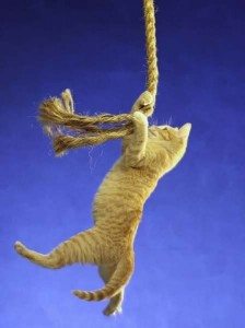 cat at end of rope