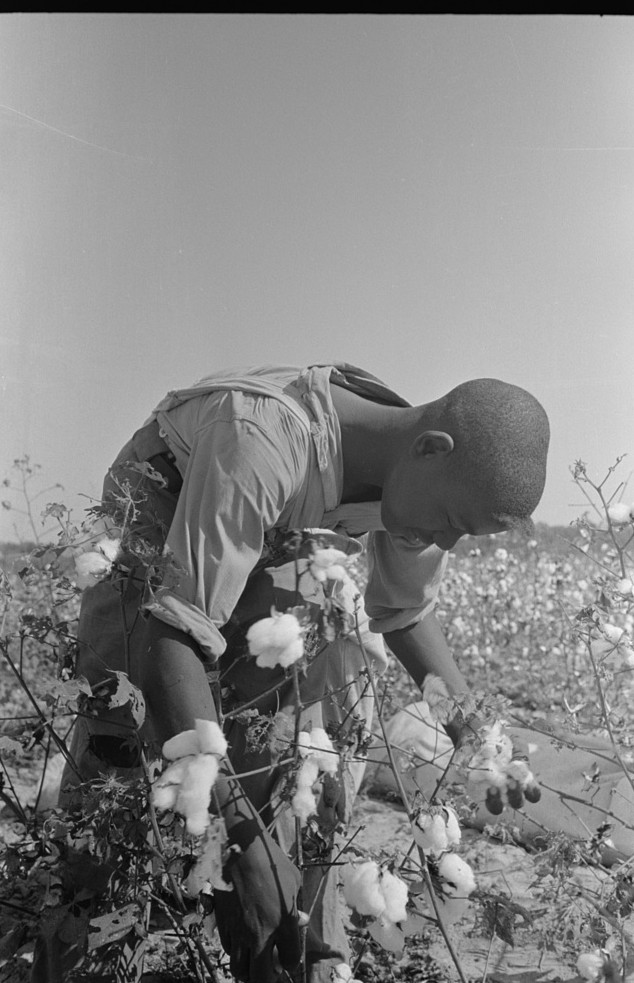 cotton day laborer