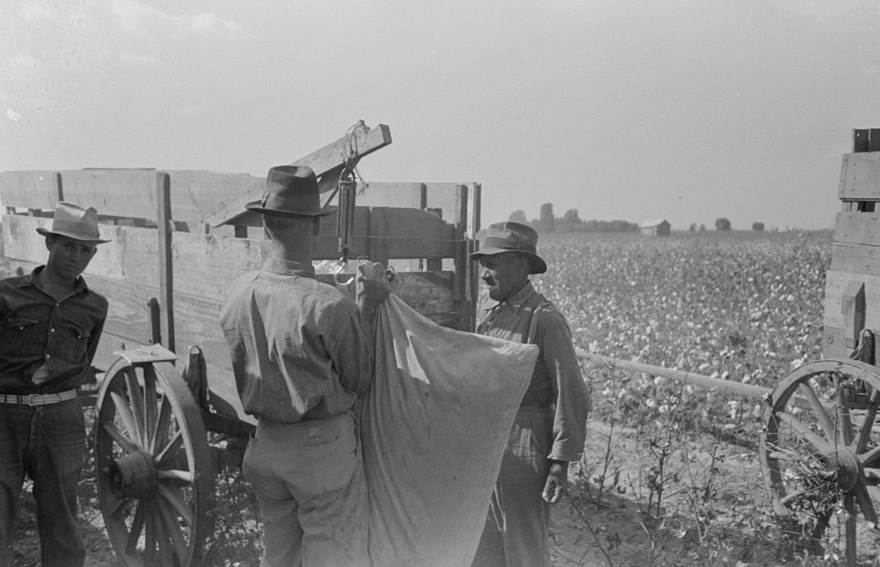 cotton pickers on truck3, Lake Dick, Arkansas]