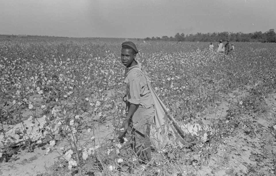 day labor picking cotton2