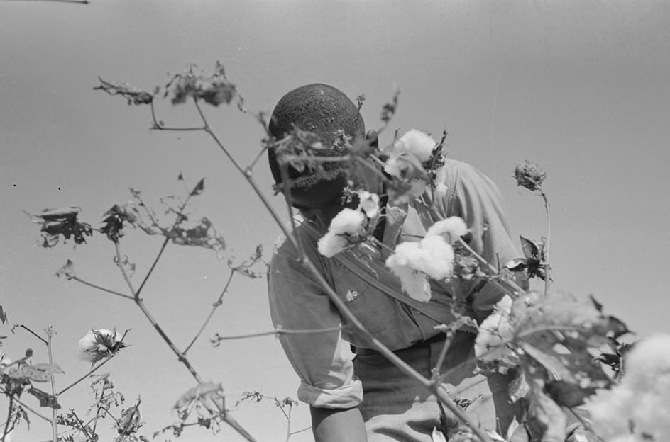 picking cotton lake dick