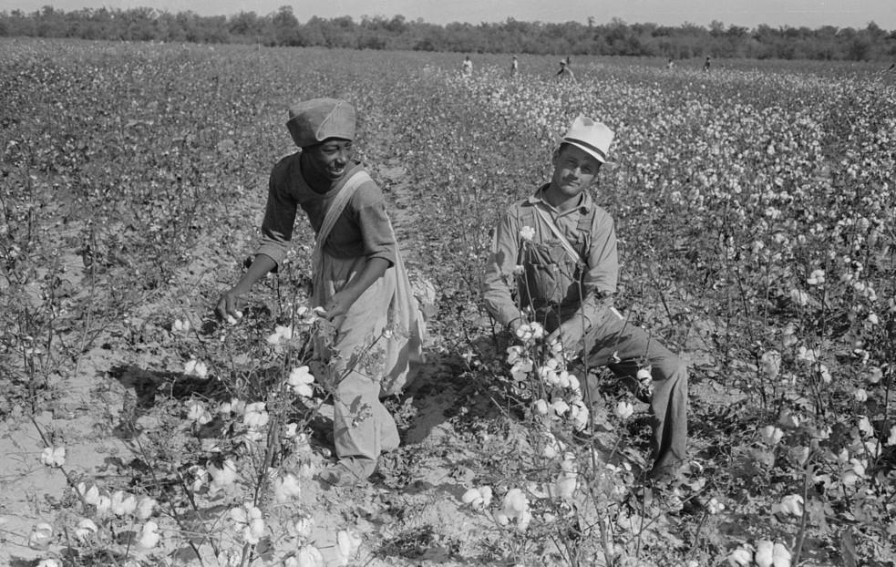 picking cotton lake dick3