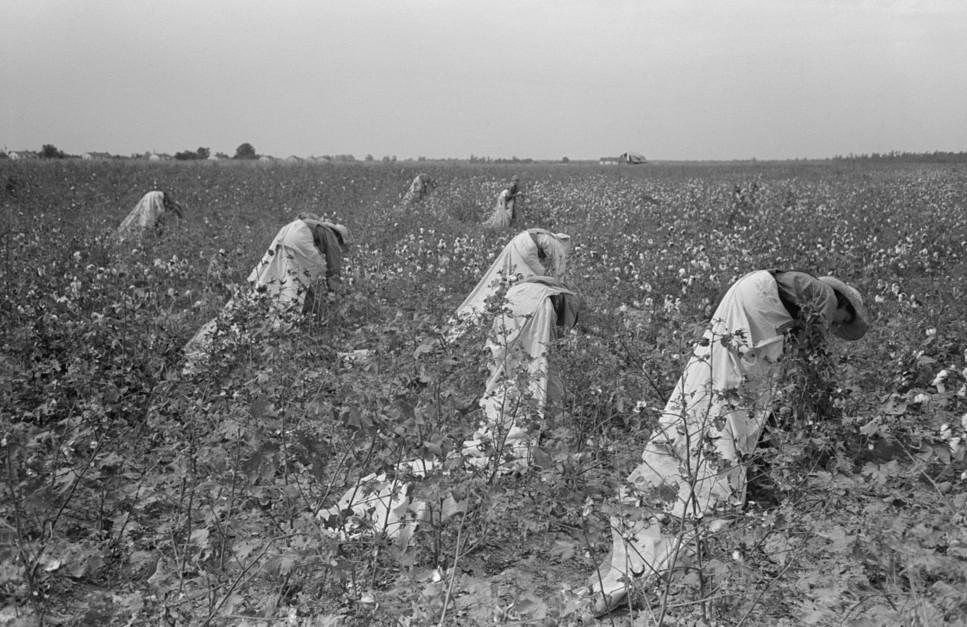 picking cotton lake dick5