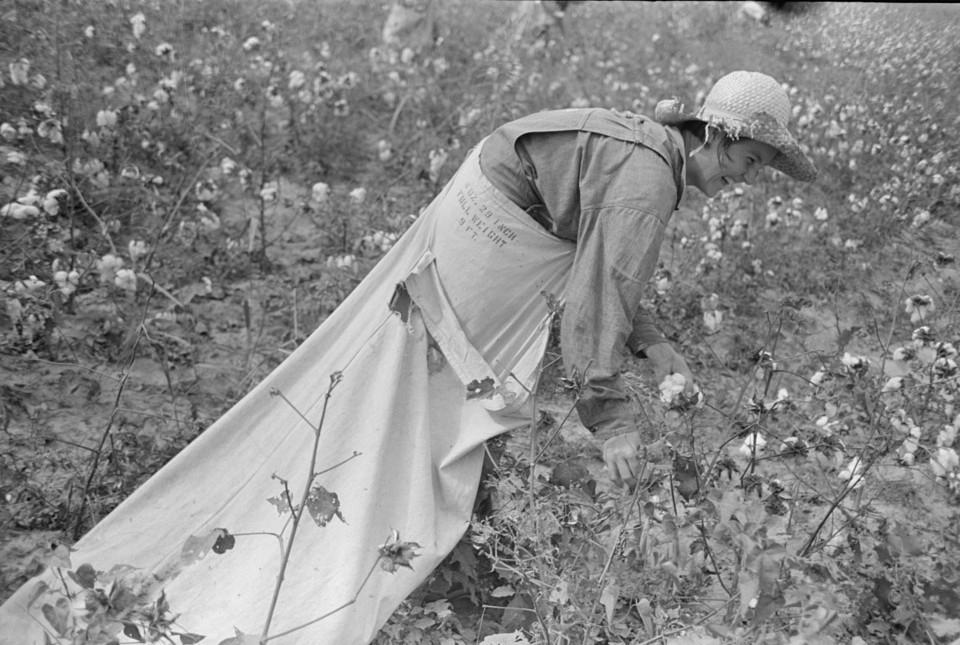 picking cotton lake dick7