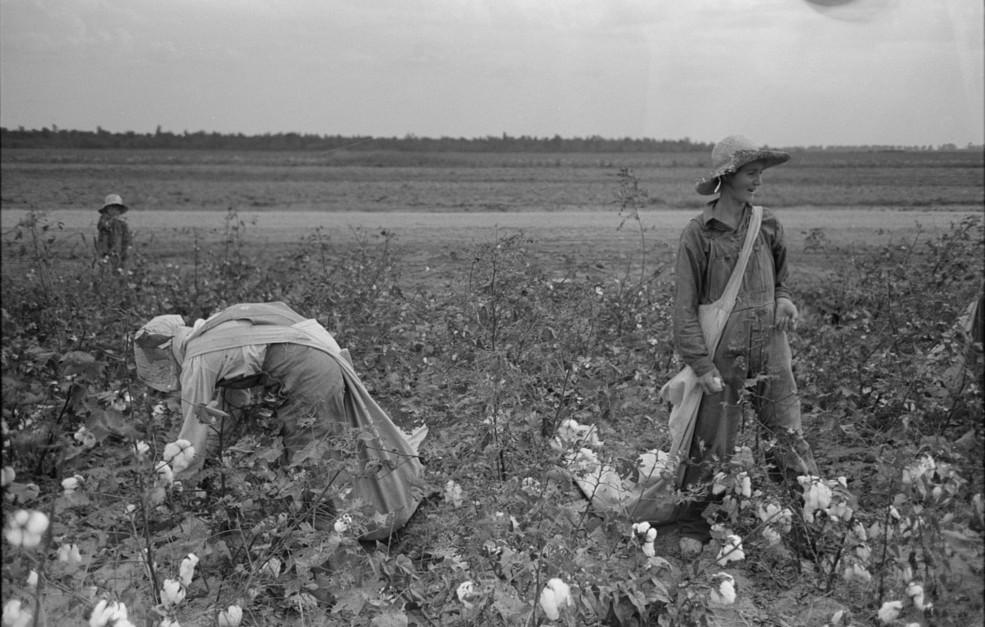 picking cotton lake dick8