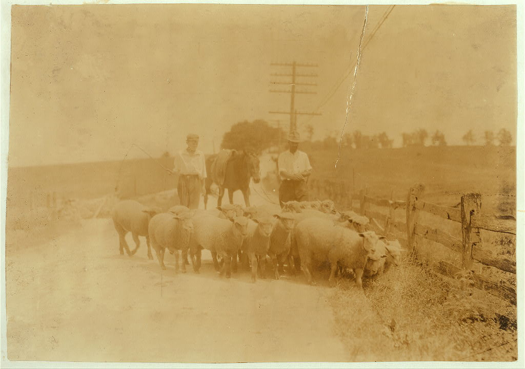 Driving sheep to town. Gartland boy did not get first name Mother runs the Farmers Hotel, Winchester. Location Clark County--Winchester, Kentucky Lewis W. Hine. 1916